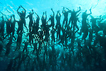 KAILUA-KONA, HI - OCTOBER 12:  A view from below of the mass 2000 person swim start during the 2013 Ironman World Championship on October 12, 2013 in Kailua-Kona, Hawaii. (Photo by Donald Miralle) *** Local Caption ***