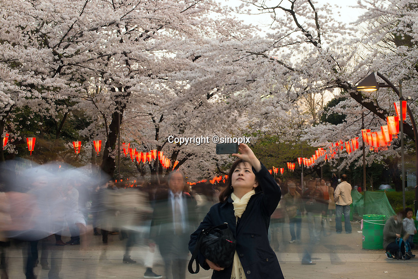 Young lady taking a photo of Cherry Blossom at Ueno Park in Tokyo, Japan