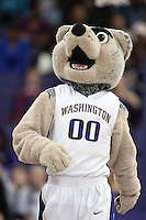 5 March 2010:  Washington Huskies mascot Harry was on hand to entertain the crowed during a timeout against Oregon State. Washington won 67-49 over Oregon State at the Bank of America Arena in Seattle, WA.