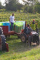 harvesting in plastic crates vineyard alsace france