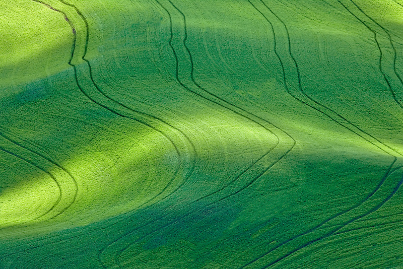 Dappled sunlight on wheat field with tractor tracks. The Palouse, Washington