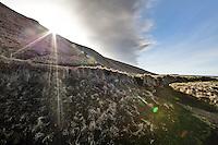 Iceland, Skogar