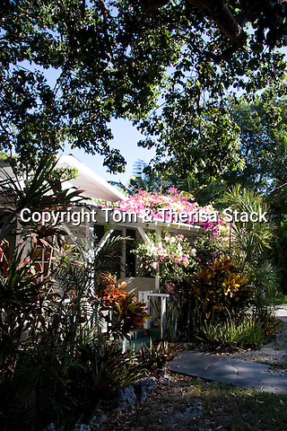 """Bougainvillae flowers growing on the porch roof of an old """"conch house"""", Tavernier, Florida Keys."""