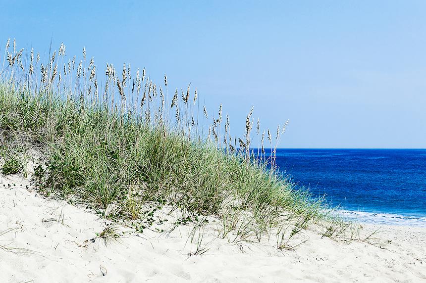 Dune grass and beach, Outer Banks, North Carolina, USA
