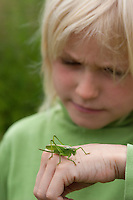 Junge, Kind mit Heuschrecke auf der Hand, Zwitscherschrecke, Zwitscher-Heupferd, Heupferd, Weibchen mit Legebohrer, Tettigonia cantans, twitching green bushcricket, twitching green bush cricket, twitching green bush-cricket, female, Tettigoniidae