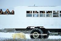01874-089.10 Polar Bear (Ursus maritimus) near Tundra Buggy  Churchill  MB