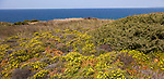 Vegetation Rota Vicentina Fishermen's Trail long distance coast path, Odeciexe, Algarve, Portugal