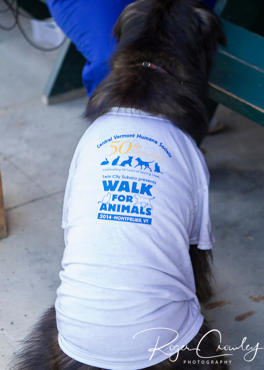 MONTPELIER VT -Twin City Subaru presents WALK for ANIMALS to help celebrate Central Vermont Humane Society' 50th anniversary. About $30,000 in donations were raised by participants.