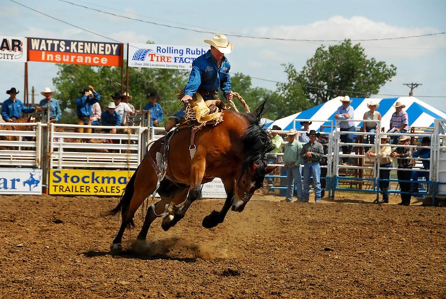 A cowboy rides a bronco Bucking Horse Sale in Miles City, Montana.