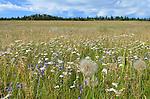 Grasslands of B.C.'s interior