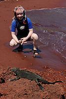 Mimmi Widstrand & Marine Iguana, (Amblyrhynchus cristatus), Rábida island, Galapagos, Ecuador.