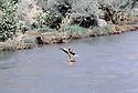Irak 1985.Dans les zones libérées, région de Lolan, peshmerga traversant une riviere a la nage avec sa kalachnikov .Iraq 1985.In liberated areas, Lolan district, a peshmerga swimming across a river with his kalachnikov