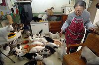 China Cat Shelter