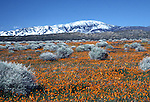 Antelope Valley California Poppy Reerve