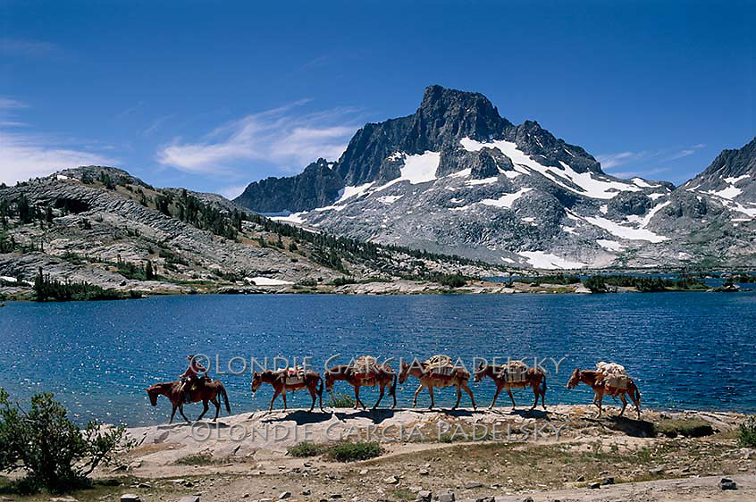 Cowboy leading pack mules at Thousand Island Lake, Ansel Adams Wilderness in Madera County, California