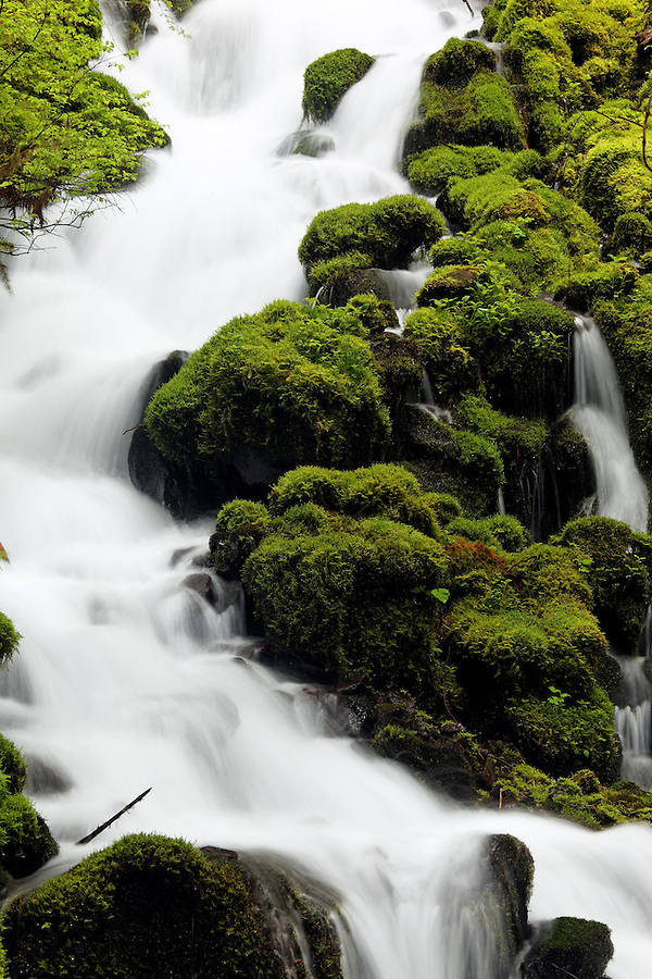 Wahkeena Creek, Columbia River Gorge National Scenic Area, Oregon, USA