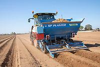 Planting potatoes - Lincolnshire, April