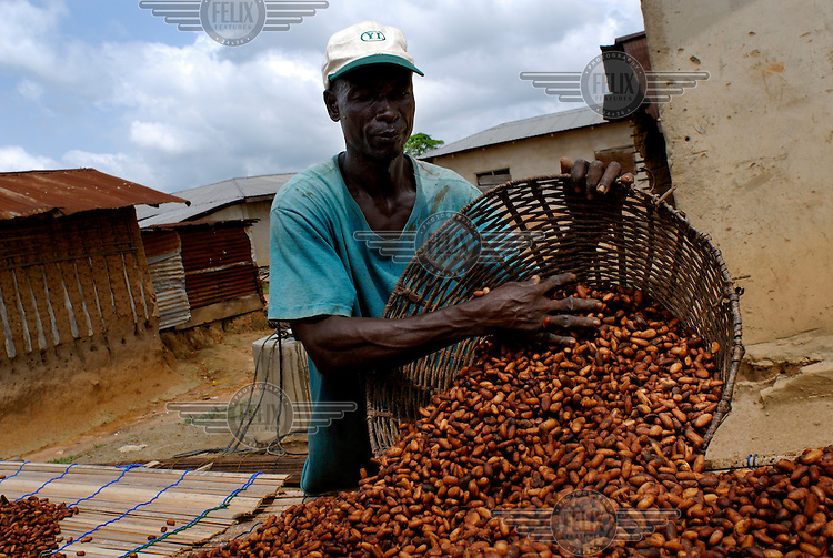 Elias Mohammed, Kuappa Kokoo's secretary, spreads out cocoa beans to dry in the sun. Kuapa Kokoo is a cocoa farmers' co-operative with 45,000 members spread across the forests of Kumasi. The farmers jointly own a 45 percent stake in the company, which is also a major stakeholder in the London-based fair trade company Divine Chocolate Ltd..