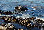 kelp forest at 17 Mile Drive