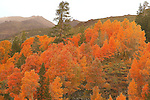 Fall Color in the High Sierra