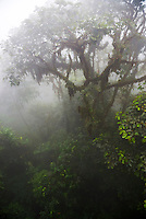 Ecuador. Misty morning in the Choco Rainforest, an area of cloud forest in the Pichincha Province of Ecuador, South America