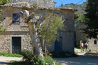 Olive tree and tourists in centre square of ancient village of Old Perithia - Palea Perithea, Northern Corfu, , Greece