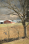 Nippenose Valley. Amish family planting field in early Spring.