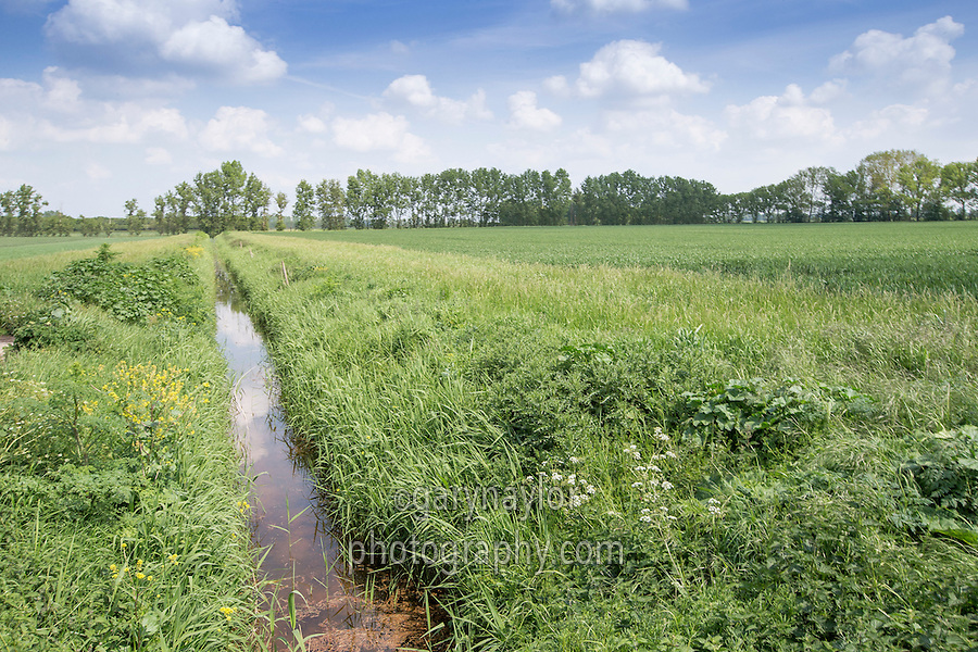 Farm drain with buffer strips to protect the watercourse - Cambridgeshire, May