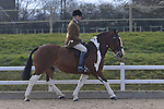 03/04/3016 - Champ Classes 24 to 27 - Affiliated Spring Showing - Brook Farm Training Centre