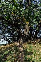 Grabhügel Speckbusch aus der Bronzezeit in Göhren auf Rügen, Mecklenburg-Vorpommern, Deutschland