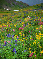 San Juan Mountains, CO<br /> Pink hues of rose paintbrush (Castilleja rhexifolia), delphinium (Delphinium barbeyi) and sunflowers (Senecio crassulus) blooming in an alpine wildflower meadow on Stony Pass