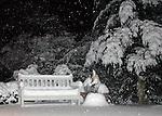 Singapura cat outdoors in snow