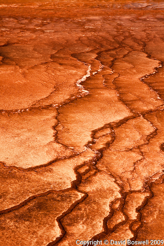 Bacterial mats thrive near Grand Prismatic Spring in Midway Geyser Basin of Yellowstone National Park.