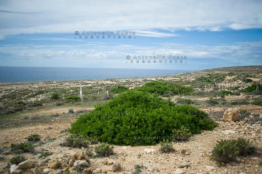 Una panoramica della costa dell'isola di Lampedusa A picture shows flowers along the coast of Lampedusa