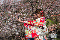 Japan, Kyoto. Girl in kimono taking selfie photo with cherry blossoms on the river.