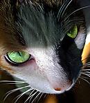 Animais. Mamiferos. Gato. Foto de Lia Caldas.