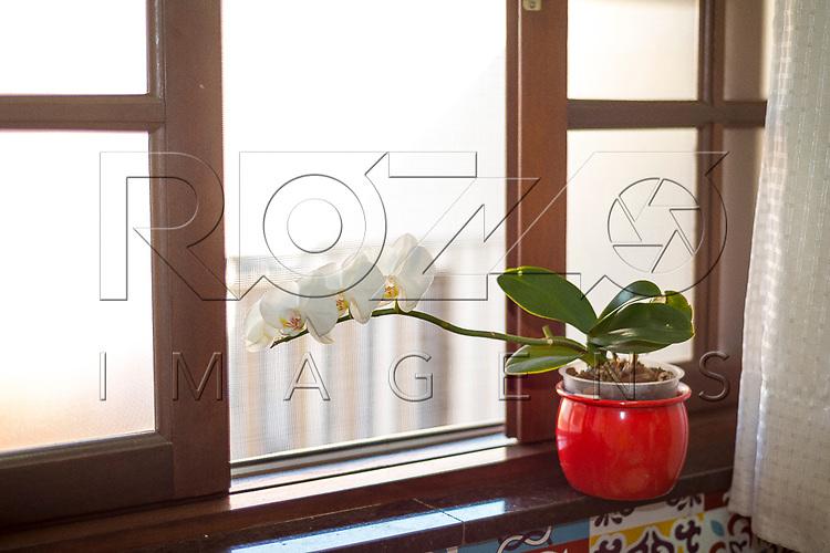 Experiência de fototropismo com orquídea: crescimento em direção à luz, São Paulo - SP, 09/2017.