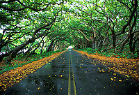 "The scenic """"red road"""" in the Puna district near Kapoho, Big Island of Hawaii"
