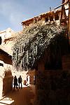 Le centre spirituel du monastère est la chapelle du Buisson Ardent, qui fait face au buisson lui-même. Il s'agit d'une espèce rare de ronce, endémique au Sinaï et d'une très grande longévité, appelée Rubus Sanctus. Elle ne donne ni fleurs ni fruits. .