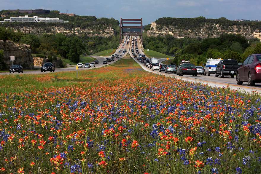 In this image, afternoon rush-hour traffic fills the 360 Capitol of Texas Highway as colorful Bluebonnets and vivid red Indian Paintbrush wildflowers frame the 360 Bridge in Austin, Texas. The Bluebonnets and Indian Paintbrush are the official state flowers of the state of Texas - Stock Image.