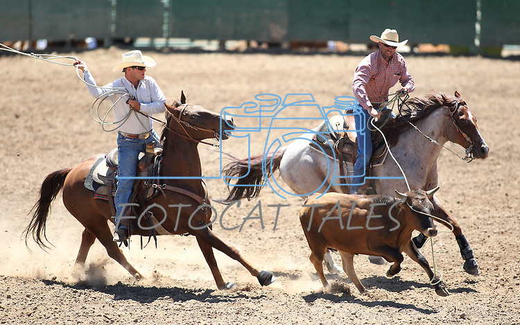 Bryson Masini and Ty Marriot compete in the team roping event at the Minden Ranch Rodeo on Saturday, July 23, 2011, in Gardnerville, Nev..Photo by Cathleen Allison