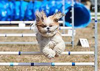 Dog Agility 15 Mar 2015