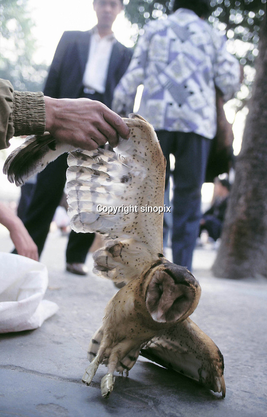 An owl is sold on a street in Shenzhen. The bird is sold as food and eaten as a stir fry.  The owl is a rare bird in China and retails for around 1200 RMB (about 150 US$) for a single bird...PHOTO BY SINOPIX