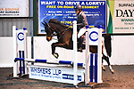 Stapleford Abbotts. United Kingdom. 03 November 2019. Class 7. Unaffiliated Showjumping championship show. Brook Farm training centre. Stapleford Abbotts. Essex. United Kingdom. Credit Melody Fisher/Sport in Pictures.~ 03/11/2019.  MANDATORY Credit Melody Fisher/SIP photo agency - NO UNAUTHORISED USE - 07837 394578