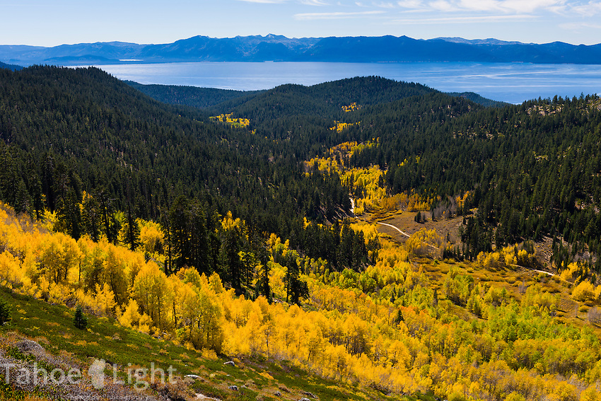 Lake Tahoe fall colors and aspen changing along North Canyon road near Marlette Lake and the Tahoe Flume Trail.