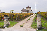 Vineyard.  Chateau Laroze. Saint Emilion, Bordeaux, France