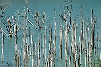 ESP, Spanien, Andalusien, Provinz Cádiz, bei Zahara de la Sierra: abgestorbene Baeume im Stausee Embalse de Zanara Gastor | ESP, Spain, Andalusia, Province Cádiz, near Zahara de la Sierra: dead trees at reservoir Embalse de Zanara Gastor
