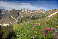Along the long trail to summit Mount Massive, one of Colorado's 14ers, I stopped to take this image of Colorado wildflowers along the slopes of the great peak. I'm not sure it gets any prettier than this!