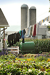 Amish backyard garden and clothesline.