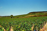 In Chablis: Les Clos and Valmur, Chablis Grands Crus vineyards, Bourgogne